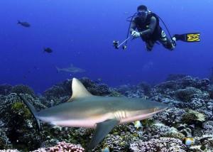 diver-photo